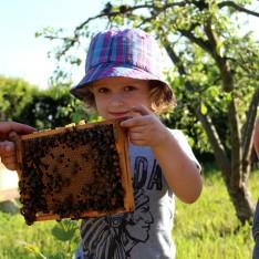 Moja pszczoła dzieciom